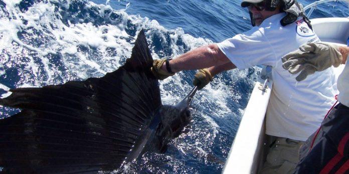 Pelagic Sportfishing – Best Of Both Worlds – Atlantic Beach NC – Puerto Quetzal Guatemala