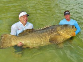 Boca Grande Pass Goliath Grouper