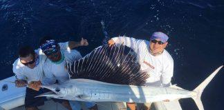 Albino Sailfish - Photo Captain Luis Wicho