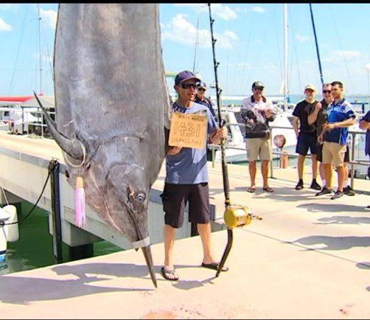 1431 lb Black Marlin