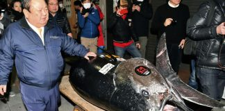Kiyomura Corp owner Kiyoshi Kimura, left, with the bluefin tuna for which he made a wining bid at the annual New Year auction, in Tokyo on Saturday. CREDIT: AP