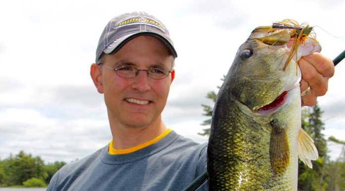 New insights on the color vision of bass