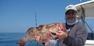 Jerry D - red grouper 2
