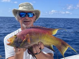 Dr Bob Timson and his world record Spanish hogfish
